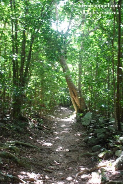 Plan A Road Trip >> Hiking Reef Bay Trail | St. John, USVI | Travel Shop Girl