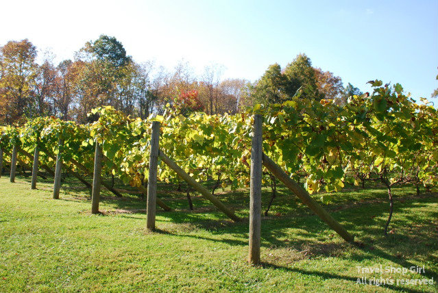 family vineyards