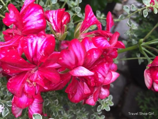flowers of Regensburg
