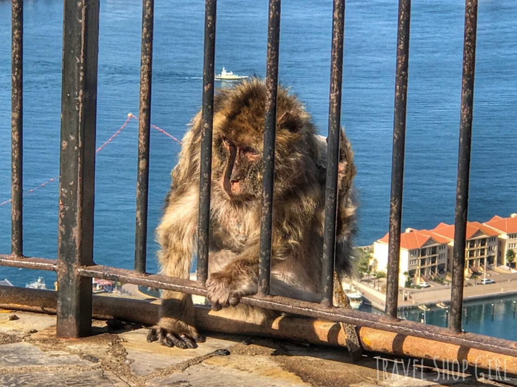 Gibraltar in one day